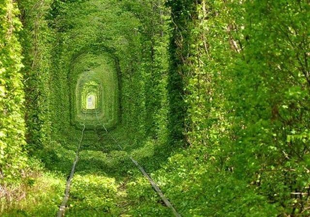 Tunnel of Love; おとぎの国に迷い込んだかのような緑のトンネル