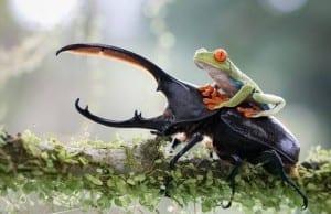 「ワレワレは地球で懸命に生きてるぞ~!」と宇宙に叫びたくなる、生命溢れる世界の生き物たちの写真30選