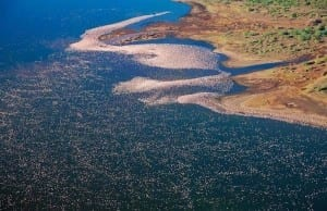 ケニアの湖に散乱する美味しそうな「ピンク色のふりかけ」?しかも、よく見ると動いている!!