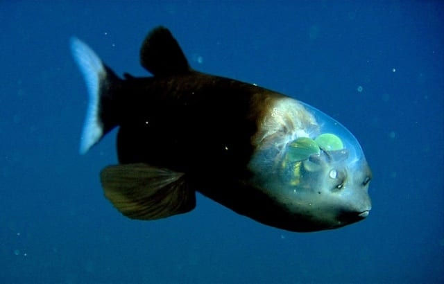深海の不思議な生き物