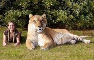 【世界は巨大だった】世界の最大級に巨大すぎる動物たち9選【何食べたの?】