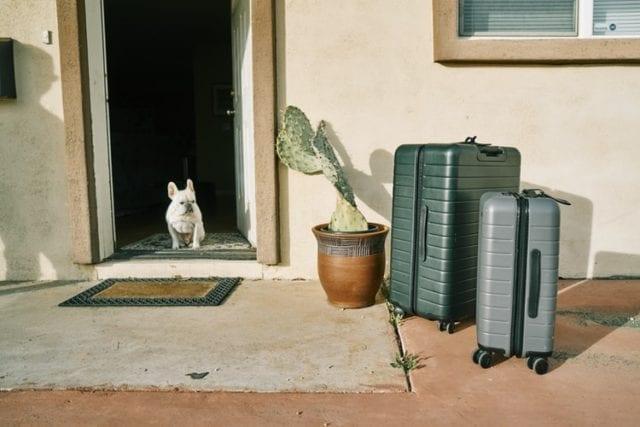 犬と飛行機に乗って海外旅行に出かける14のコツ【国際線での機内持ち込みの可否など】