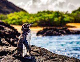 【可愛すぎ】ペンギン好き必見の世界のおすすめ観光地7選