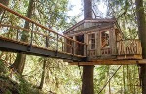 誰もが童心に帰れる場所「ツリーハウスポイント(TreeHouse Point)」