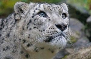 動物を愛するあなたに知ってほしい世界のボランティア団体7選