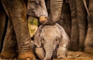 【7つの実話】動物の為ならどこへでも!世界のアニマルレスキューのお仕事を応援したい!